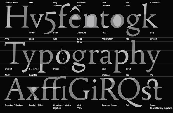 The basic anatomy of a typeface